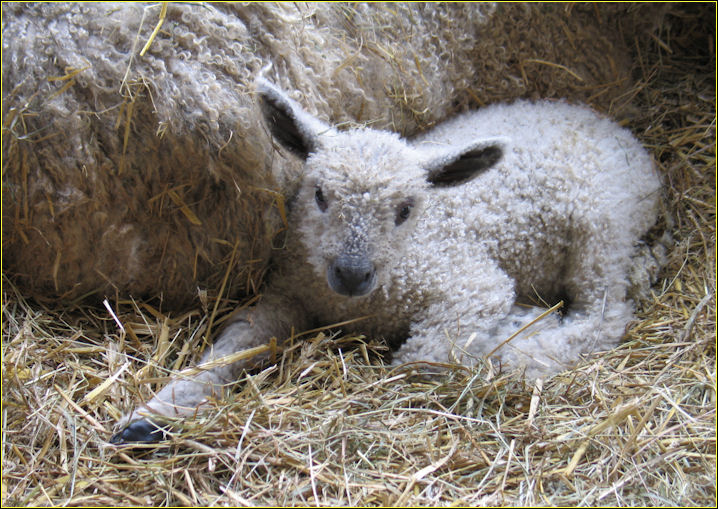 New born. Photo  taken at Church Farm